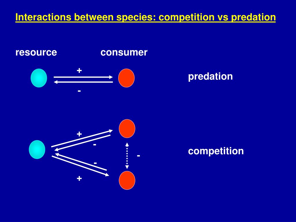 Interactions between species: competition vs predation