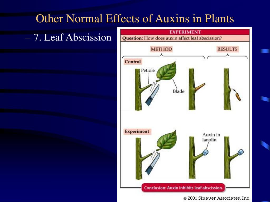 Other Normal Effects of Auxins in Plants
