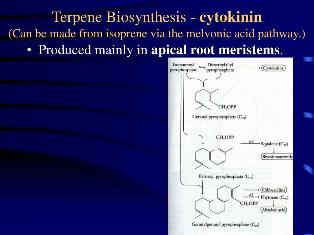 Terpene Biosynthesis -