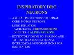 inspiratory drg neurons