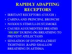 rapidly adapting receptors