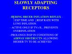 slowly adapting receptors