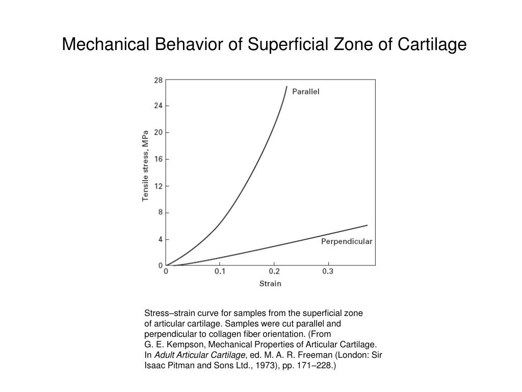 Mechanical Behavior of Superficial Zone of Cartilage
