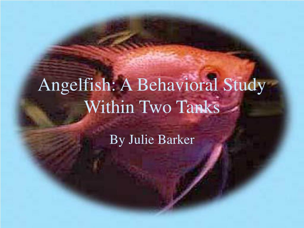 angelfish a behavioral study within two tanks l.