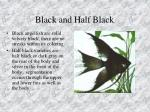 black and half black