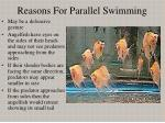 reasons for parallel swimming