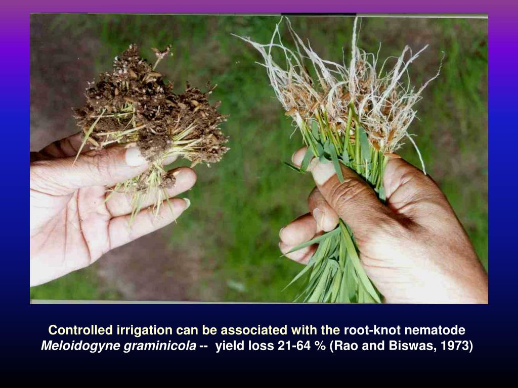 Controlled irrigation can be associated with the
