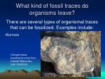 what kind of fossil traces do organisms leave