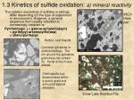 1 3 kinetics of sulfide oxidation a mineral reactivity