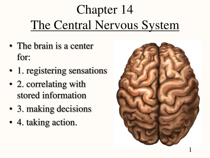 chapter 14 the central nervous system n.