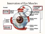 innervation of eye muscles