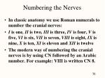 numbering the nerves