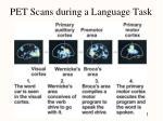 pet scans during a language task