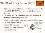 the blood brain barrier bbb