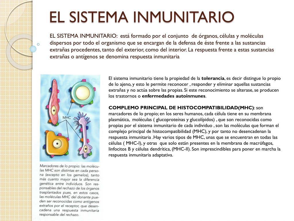 el sistema inmunitario l.