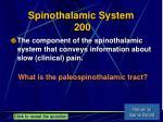 spinothalamic system 200