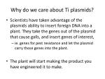 why do we care about ti plasmids