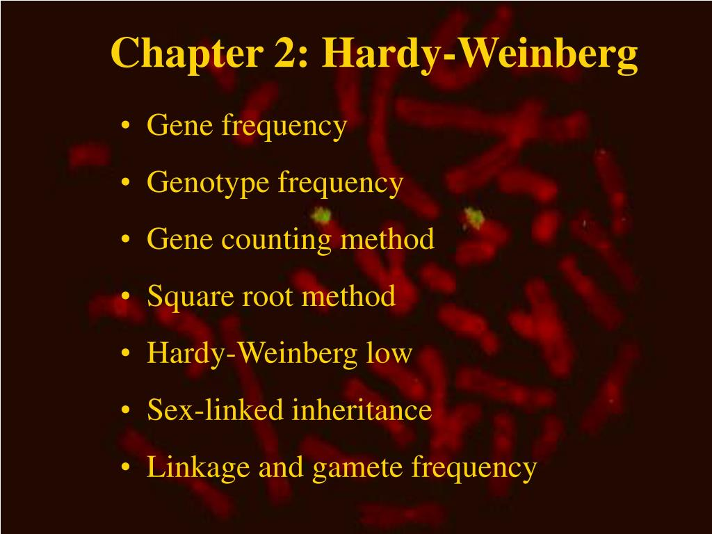 chapter 2 hardy weinberg l.