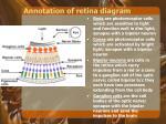annotation of retina diagram