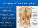 anatomy of dual innervation