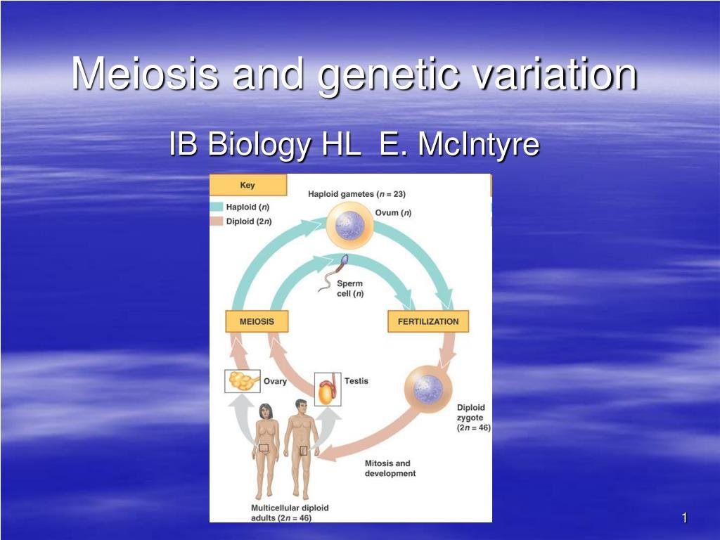meiosis and genetic variation l.