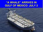 a whale arrives in gulf of mexico july 2