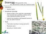 sn mugg monographella nivalis kon microdochium nivale syn fusarium nivale