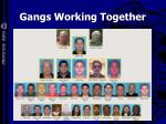 gangs working together