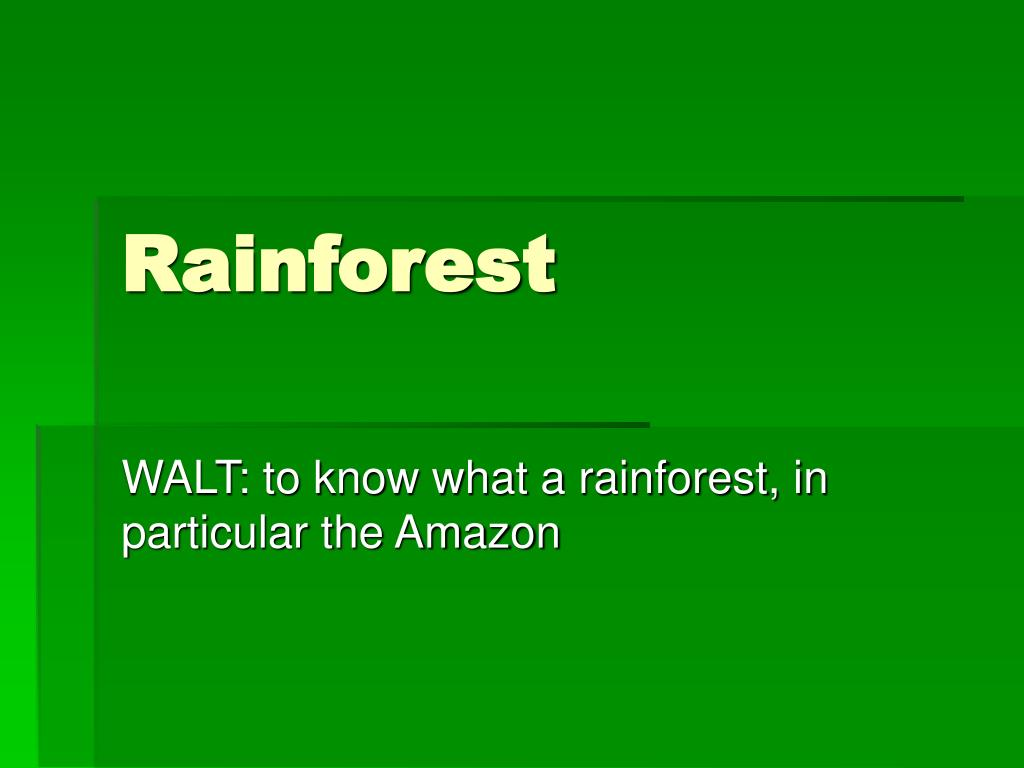 rainforest l.
