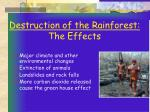 destruction of the rainforest the effects