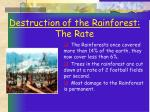 destruction of the rainforest the rate