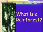 what is a rainforest