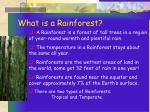 what is a rainforest13