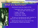 what is a rainforest14