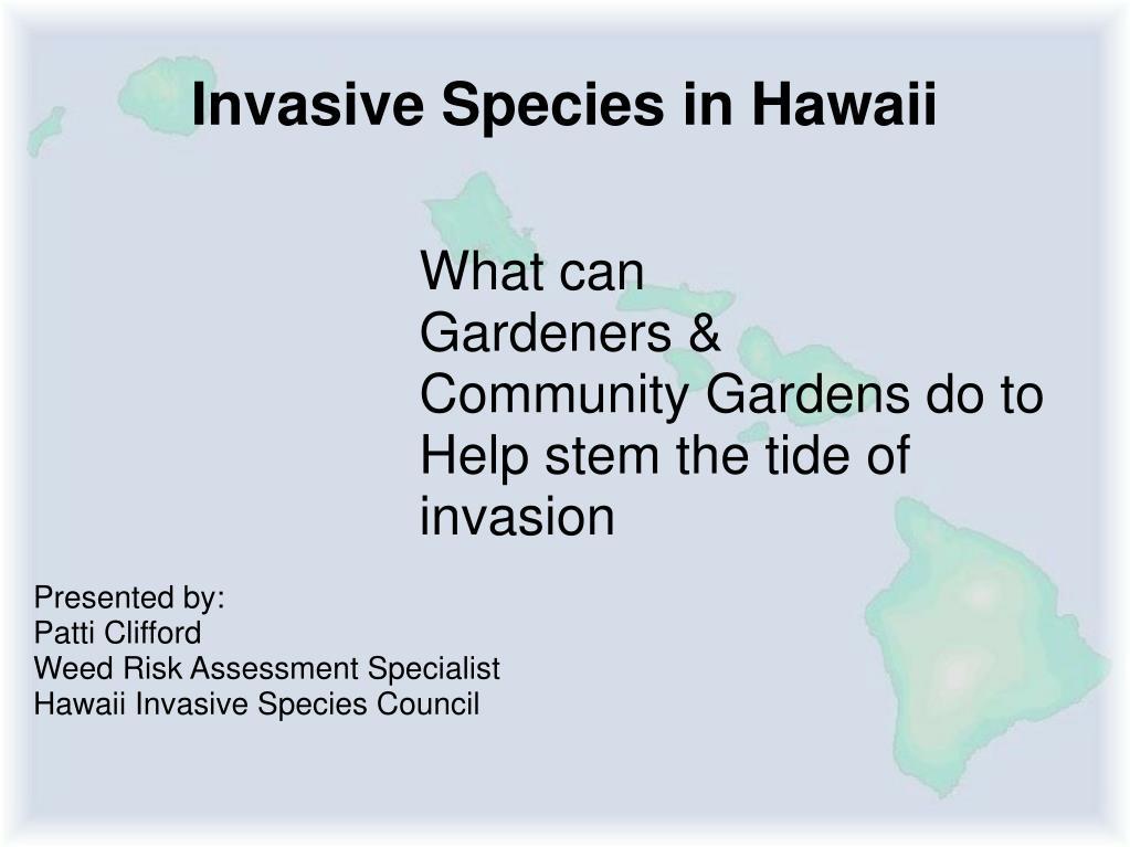 invasive species in hawaii l.