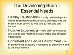 the developing brain essential needs