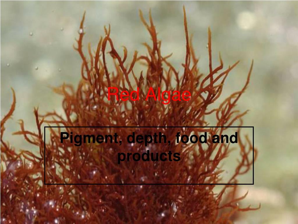 red algae l.