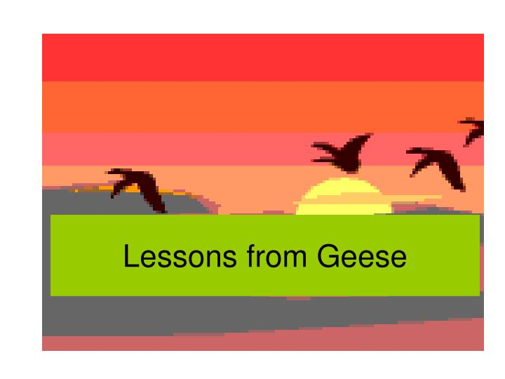 lessons from geese n.