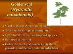 goldenseal hydrastis canadensis