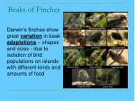 beaks of finches32