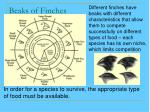 beaks of finches39
