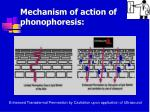mechanism of action of phonophoresis