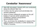 cerebellar awareness