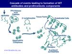 cascade of events leading to formation of hit antibodies and prothrombotic components