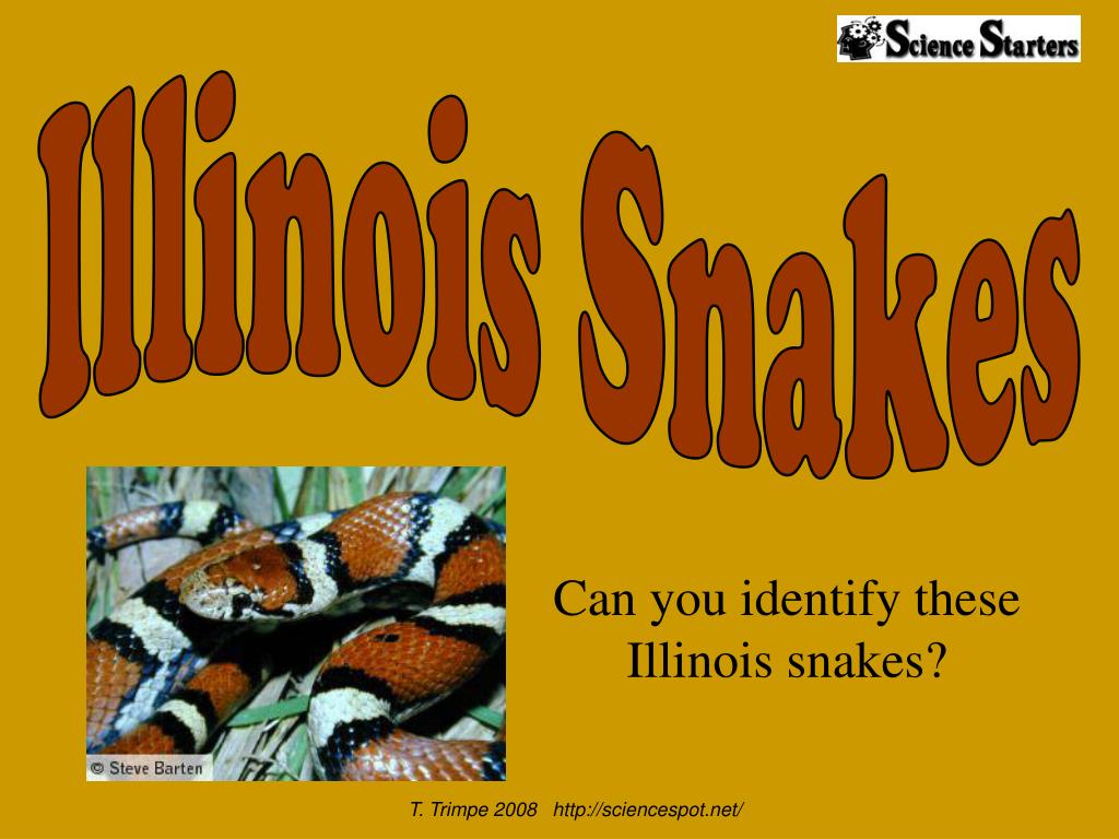 can you identify these illinois snakes l.