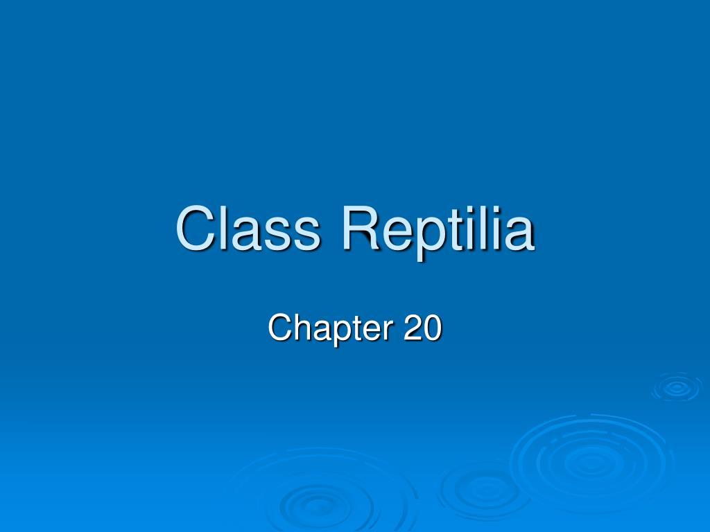 class reptilia l.