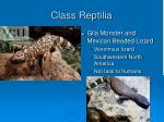 class reptilia19