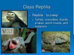 class reptilia2