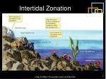 intertidal zonation