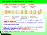 postsynaptic membranes and ion channels